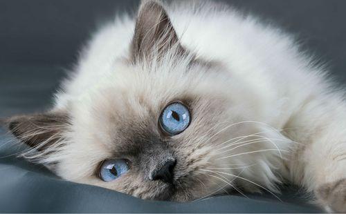 nova mokra crna maca crno-bijeli lezbijski hd
