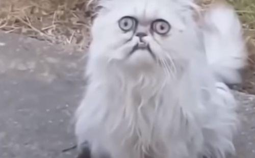 Velika mama maca