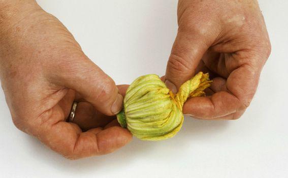 Cvijet tikvice - 1