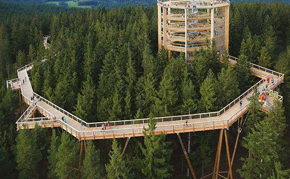 Treetop Walk Pohorje - 1