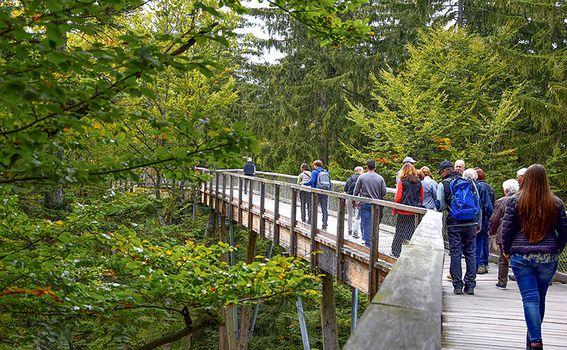 Treetop Walk Pohorje - 2
