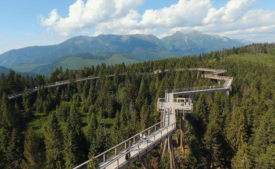 Treetop Walk Pohorje - 7