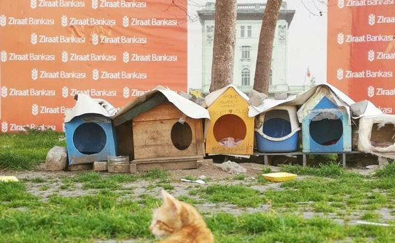 Lutalice u Istanbulu - 6