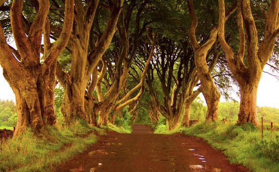 Avenija koja je dio 'scenografije' Igre prijestolja