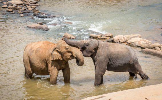 Slonovi u zatočeništvu djeluju tužno