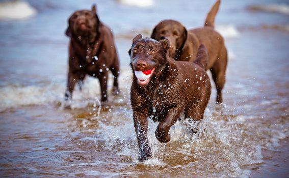 Psi na plaži - 2