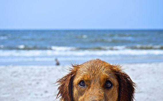 Psi na plaži - 3