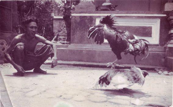 Lokalni običaji bili su čest motiv Šimunovićevih fotografija - ovdje je prikazana borba pijetlova na Sumatri