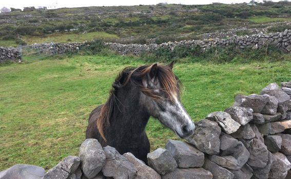 Aranski otoci, Irska - 7