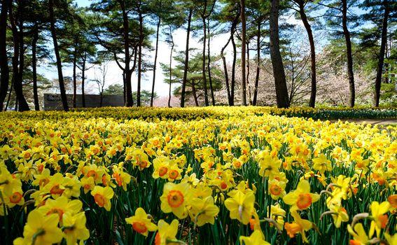 Hitachi Seaside park, Japan - 8