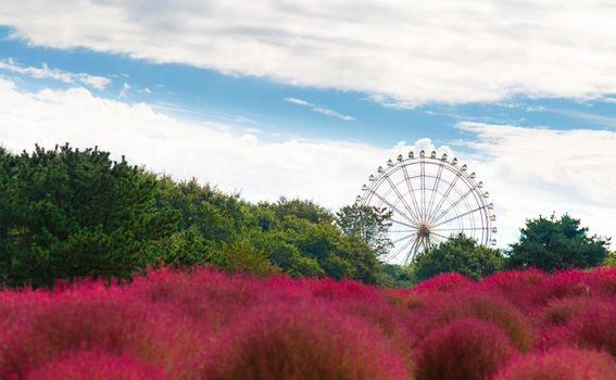 Hitachi Seaside park, Japan - 9