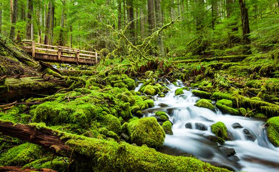 Olympic National Forest, SAD - 9