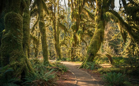 Olympic National Forest, SAD - 11