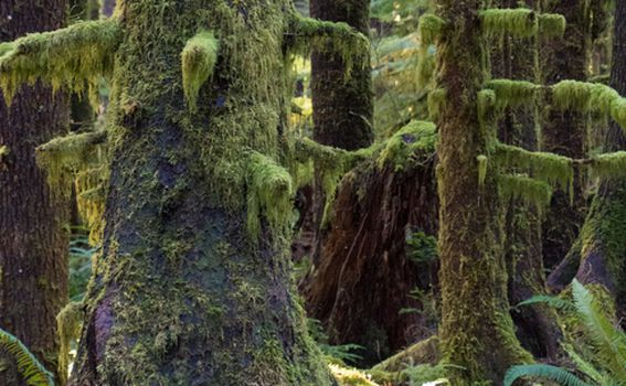 Olympic National Forest, SAD - 12
