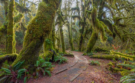 Olympic National Forest, SAD - 13