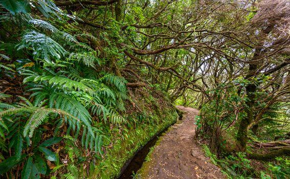 Parque Florestal das Queimadas, Madeira - 6