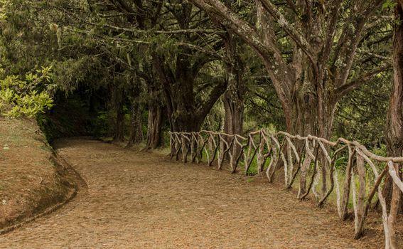 Parque Florestal das Queimadas, Madeira - 11