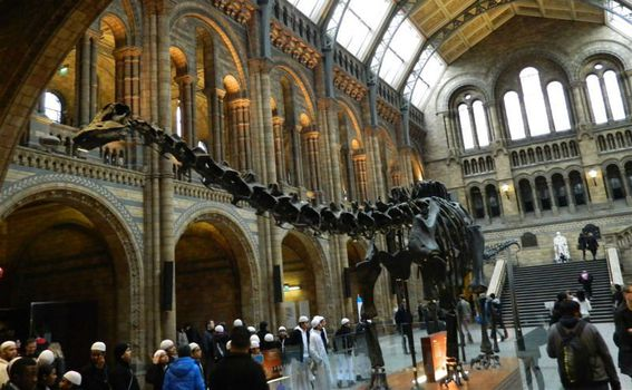 National History Museum - 2