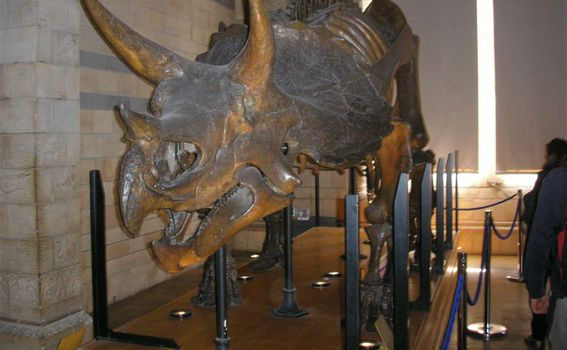 National History Museum - 3
