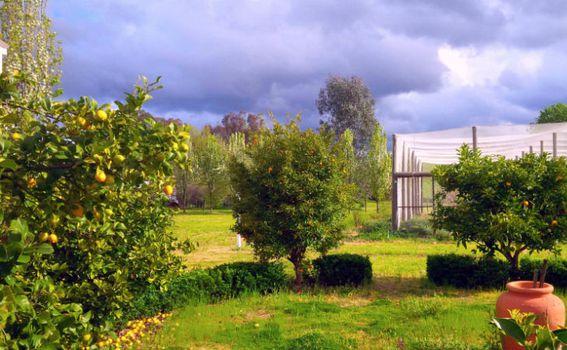 Stabla agruma
