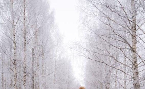 Laponija