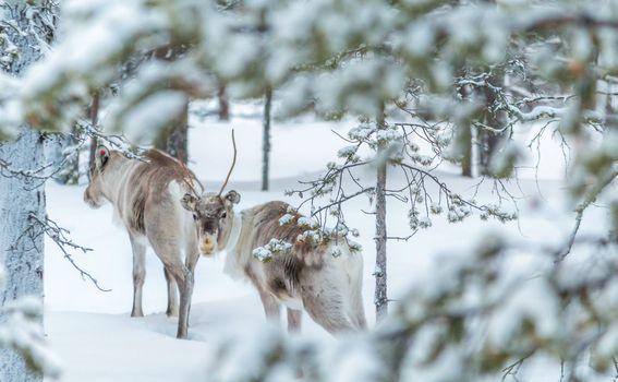 Rudolf i ekipa