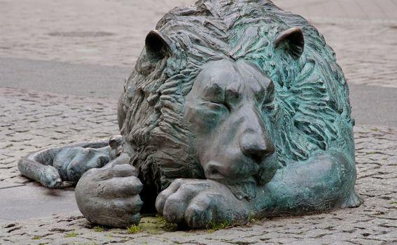 Lav koji spava