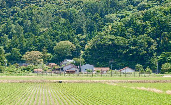 Okinoshima - 4