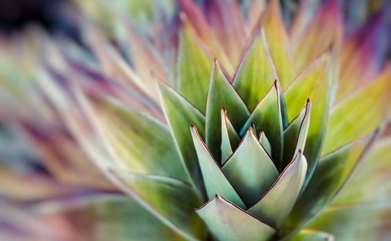 Neobične flora i fauna na Roirami