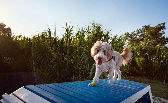 Monty\'s Dog Beach & Bar - 3