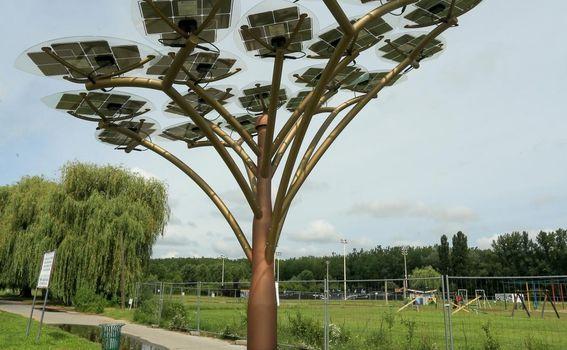 Solarno stablo - 2