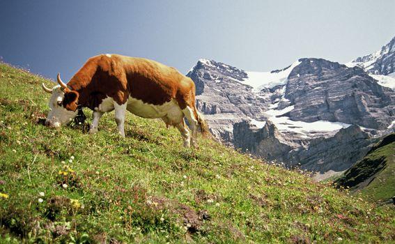 Gimmelwald, Švicarska - 2