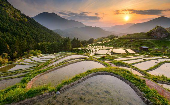 Polja riže u Japanu