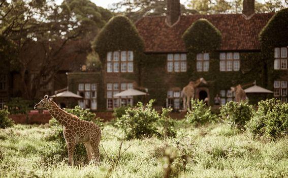 Giraffe manor hotel, Kenija - 2