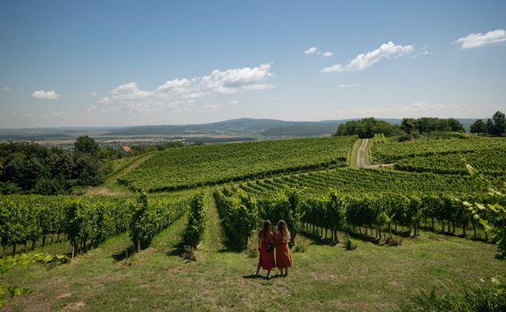 Cesta ruža i vina, vinarija Markota
