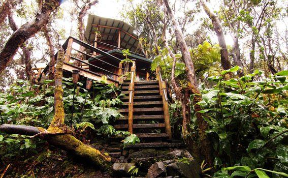 Kućica na stablu na Havajima - 2