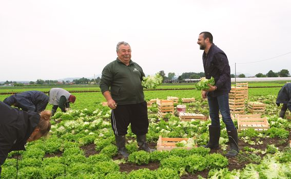 Zlatko Zagorec i David Skoko u berbi salate