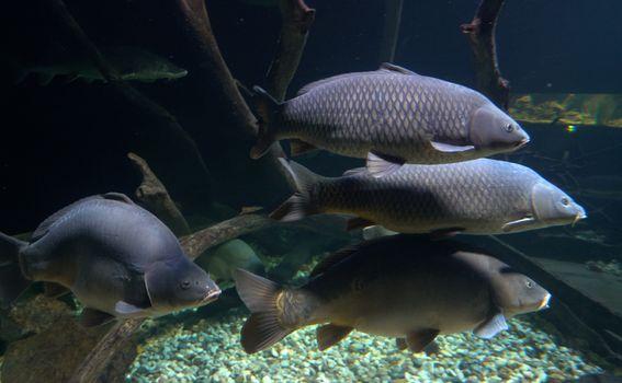 U Aquatici možete vidjeti oko sto vrsta riba