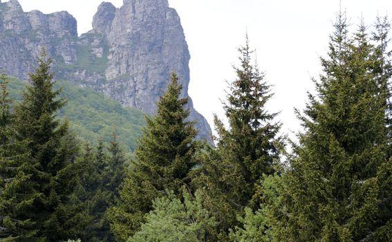 Highlander Stara planina - 29