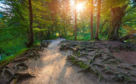 Aktivan odmor u šumi