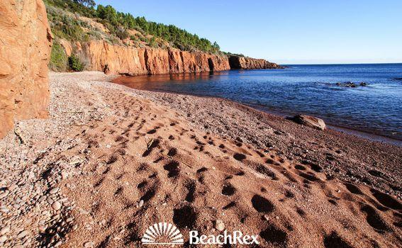 BeachRex - 2