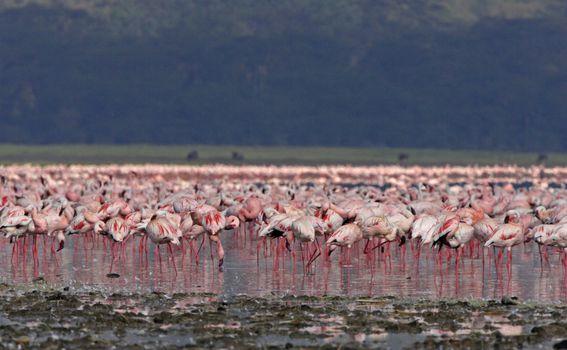 Jezero Nakuru - 5