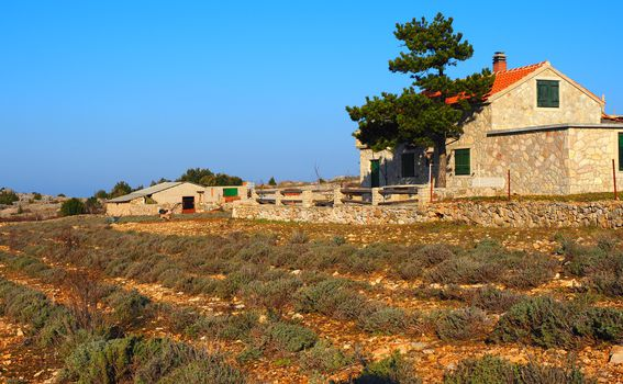 Vila Katarina