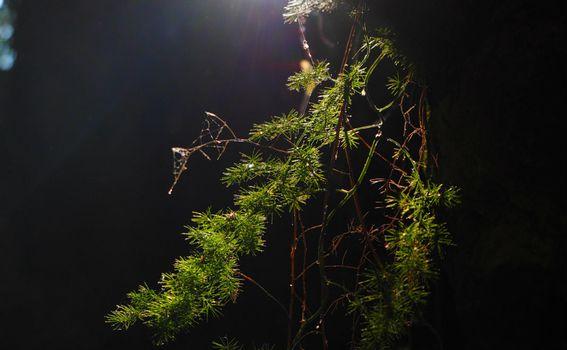 Kočje na Korčuli - 15