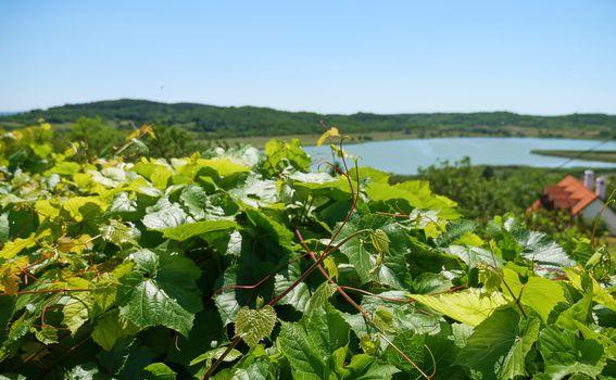 Pogled na jezero Hevíz