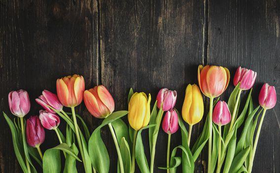 Tulipani - 5