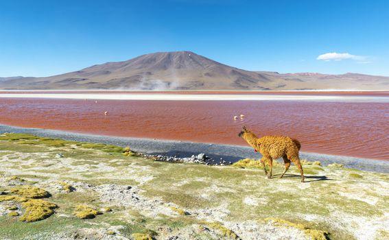 Crvena laguna u Boliviji - 2