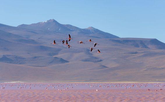 Crvena laguna u Boliviji - 5