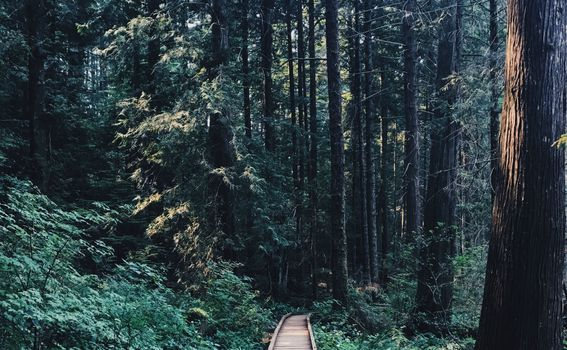 Trail - 2