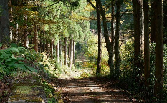 Trail - 4
